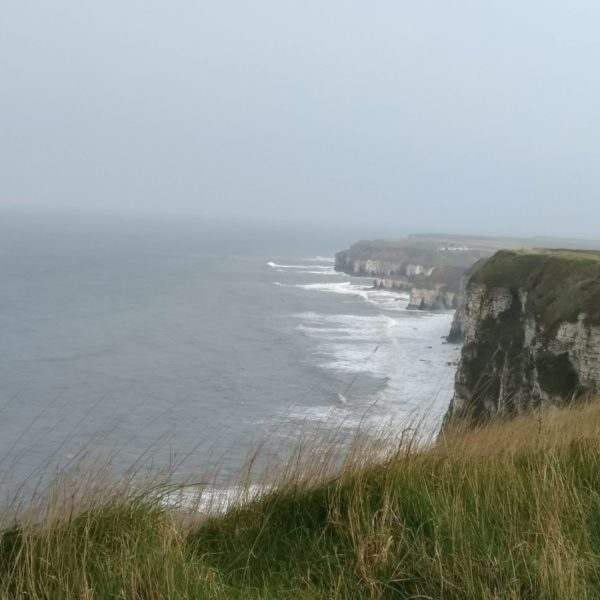 Bempton Cliffs, North Yorkshire photo 1
