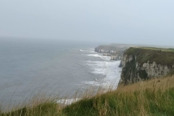 Bempton Cliffs, North Yorkshirephoto