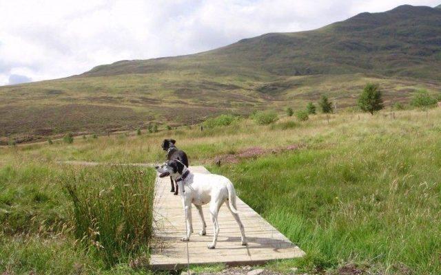 Ben Lawers Dog walk in Stirlingshire