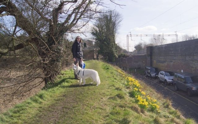 Berkhamsted Castle Dog walk in Hertfordshire