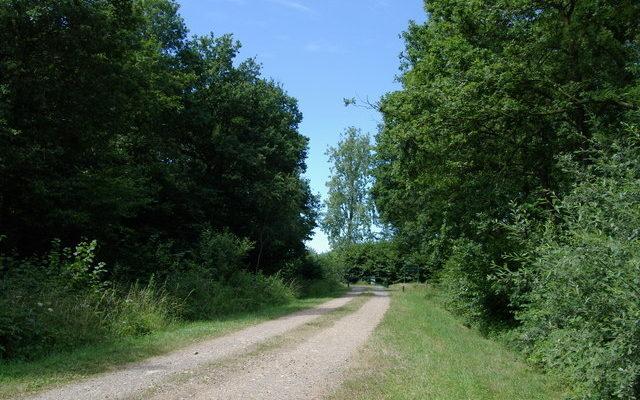 Bernwood Forest Dog walk in Oxfordshire