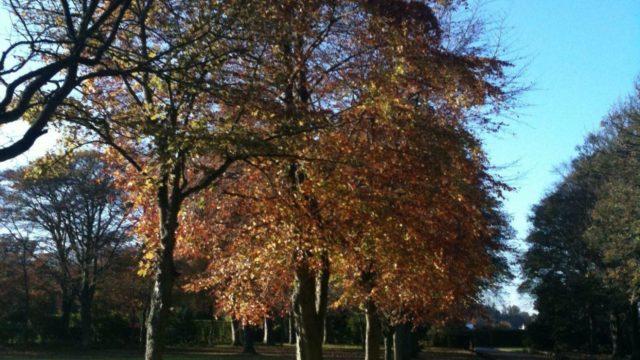 Dog walk at Beveridge Park
