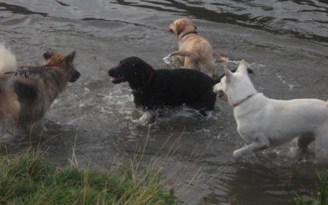 St Ives (Hemingford Meadow) Dog walk in Cambridgeshire
