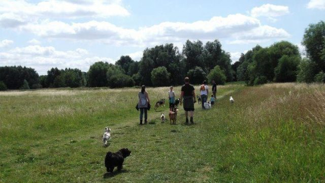 Dog walk at St Neots - Weekly Walk