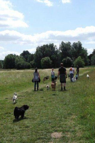 Dog walk at St Neots - Weekly Walk photo