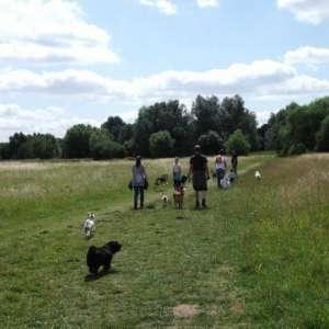 St Neots - Weekly Walk