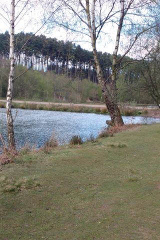 Dog walk at Birches Valley Cannock Chase photo
