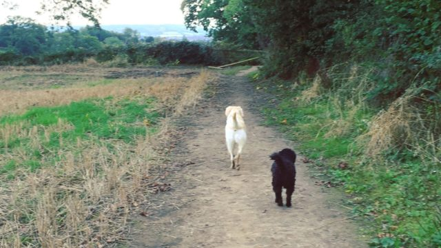 Dog walk at Birds Marsh