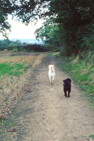 Dog walk at Birds Marsh photo