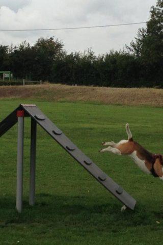 Dog walk at Bishops Stortford Southern Country Park Dog Agility Walk photo