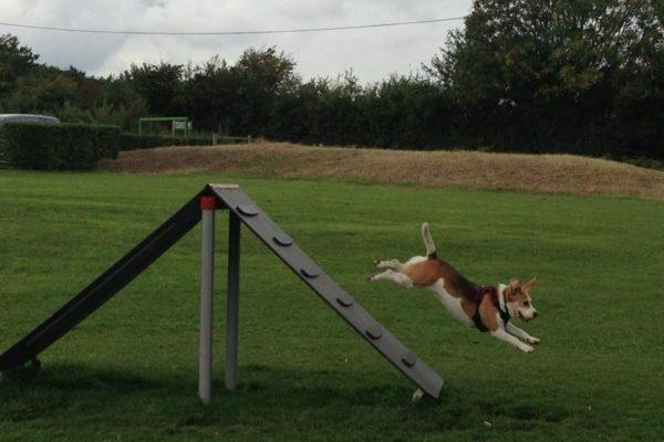 Bishops Stortford Southern Country Park Dog Agility Walkphoto