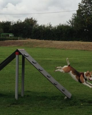 Dog walk at Bishops Stortford Southern Country Park Dog Agility Walk