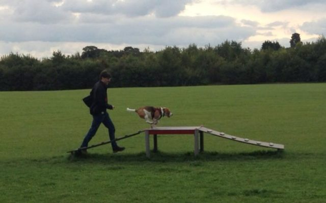 Bishops Stortford Southern Country Park Dog Agility Walk Dog walk in Hertfordshire