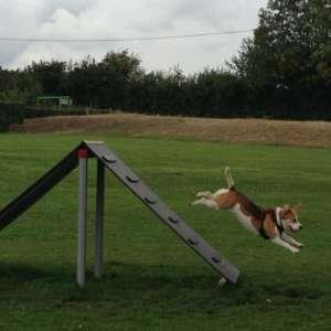 Bishops Stortford Southern Country Park Dog Agility Walk