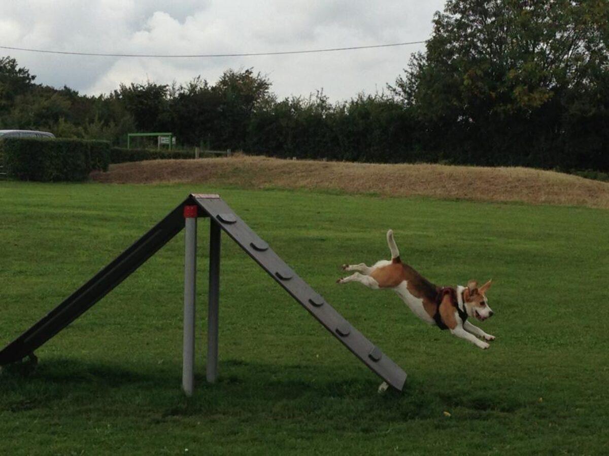 Bishops Stortford Southern Country Park Dog Agility Walk large photo 1
