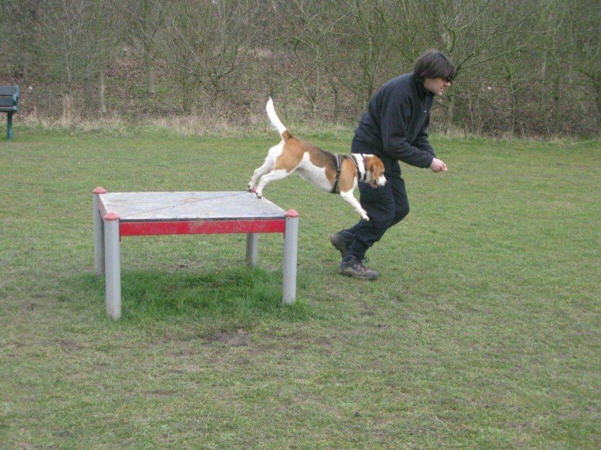 Bishops Stortford Southern Country Park Dog Agility Walk large photo 3
