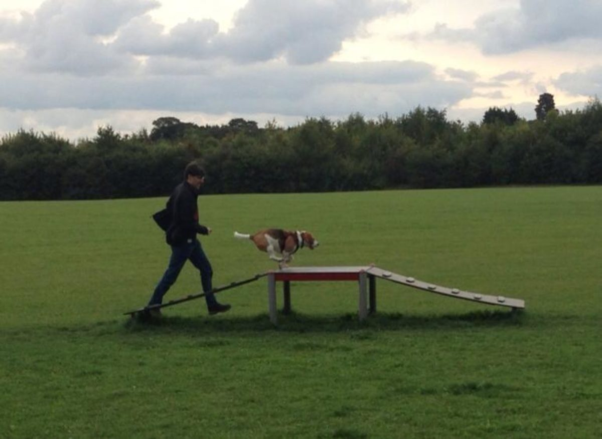 Bishops Stortford Southern Country Park Dog Agility Walk large photo 4