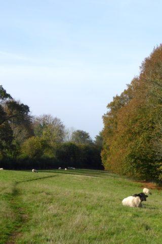 Dog walk at Blackmoor Copse photo