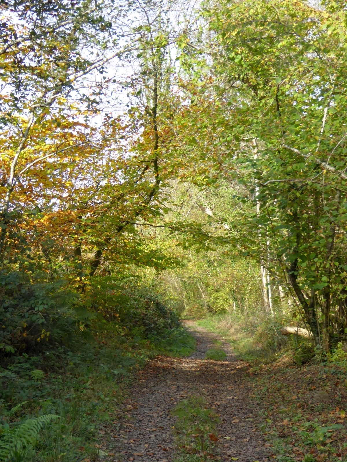 Blackmoor Copse large photo 3