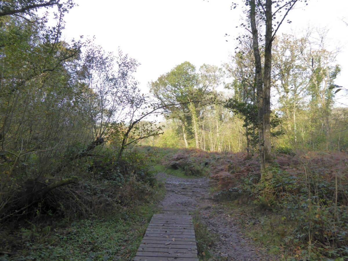 Blackmoor Copse large photo 2