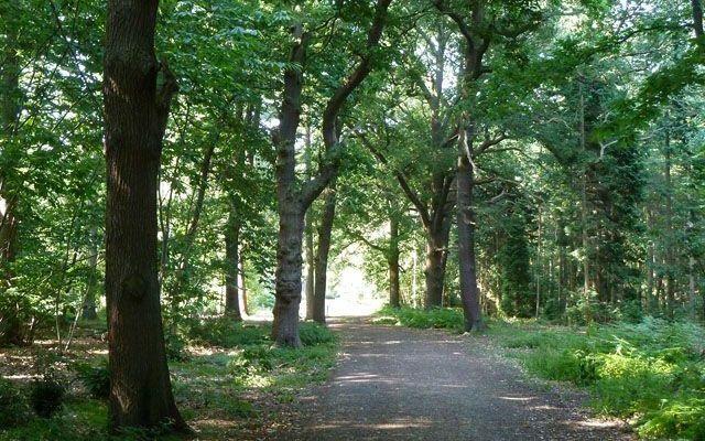 Black's Park Dog walk in Berkshire