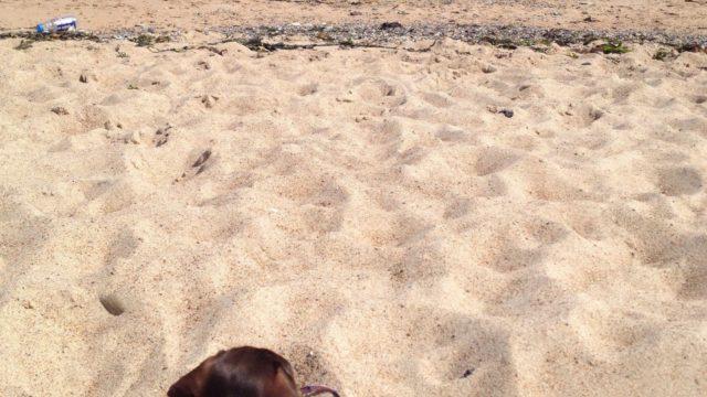 Dog walk at Blyth South Beach