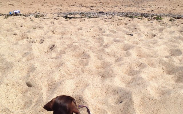 Blyth South Beach Dog walk in Northumberland