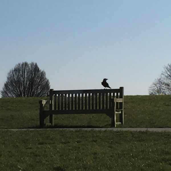 Dog walk at Blythe Hill Fields