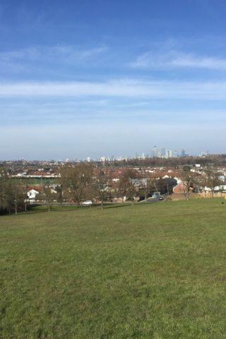 Dog walk at Blythe Hill Fields photo