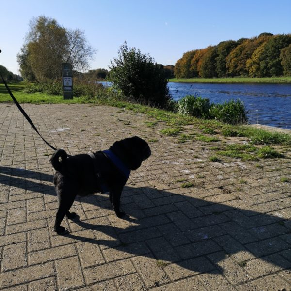 Dog walk at Boardwalks and Thorpe Meadows