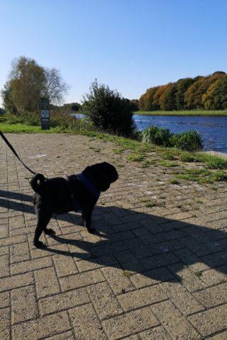Dog walk at Boardwalks and Thorpe Meadows photo
