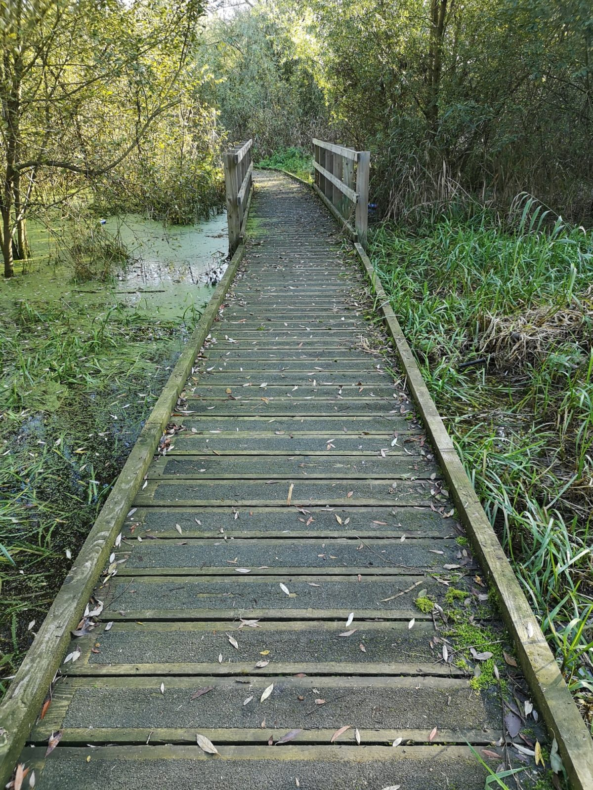 Boardwalks and Thorpe Meadows large photo 6