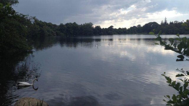 Dog walk at Bolam Lake