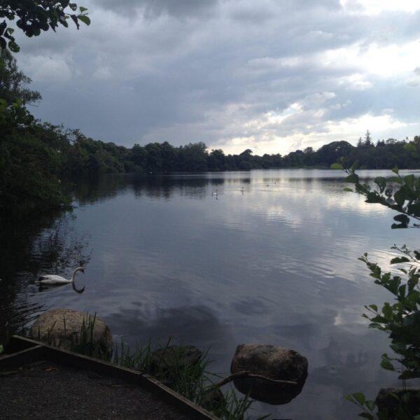 Dog walk at Bolam Lake
