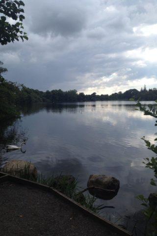 Dog walk at Bolam Lake photo