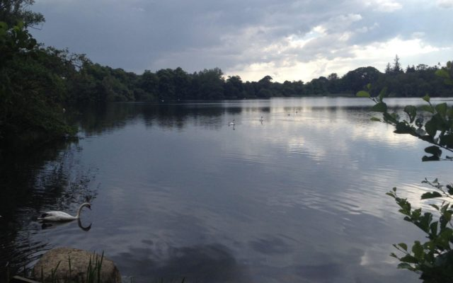 Bolam Lake Dog walk in Northumberland