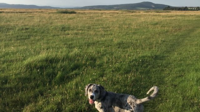 Dog walk at Bolton-le-sands