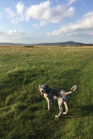 Dog walk at Bolton-le-sands photo