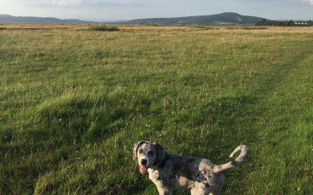 Bolton-le-sands Dog walk in Lancashire