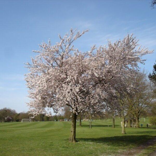 Bourne Park photo 2