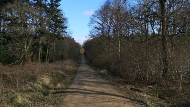 Dog walk at Bourne Woods