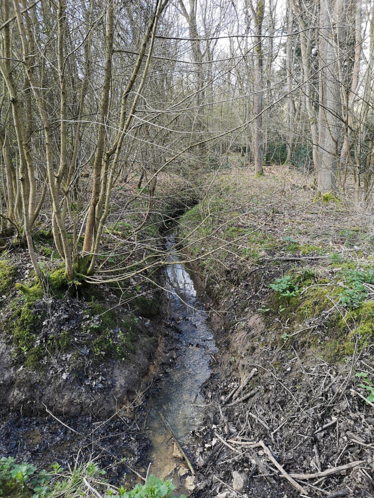 Bourne Woods large photo 2