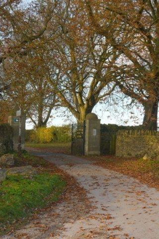 Dog walk at Box Woods & Hazelbury Manor photo