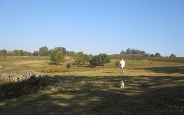 Bradgate Park Dog walk in Leicestershire
