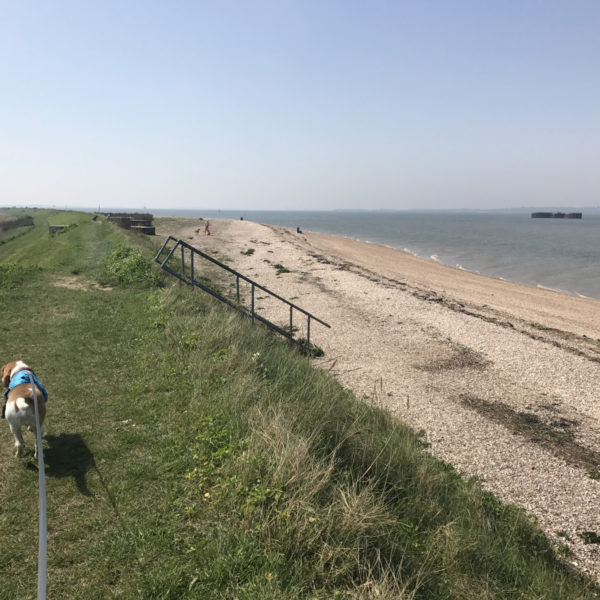 Dog walk at Bradwell Beach