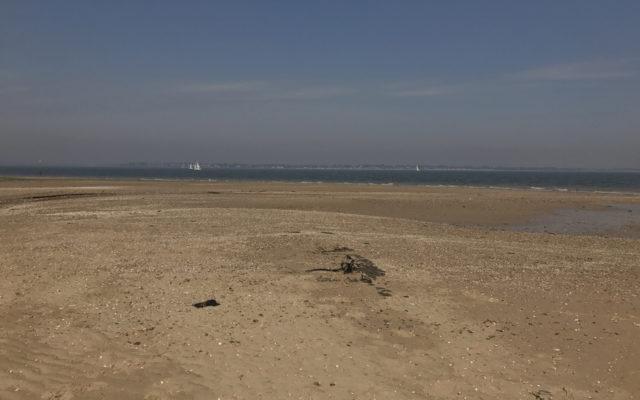 Bradwell Beach Dog walk in Essex