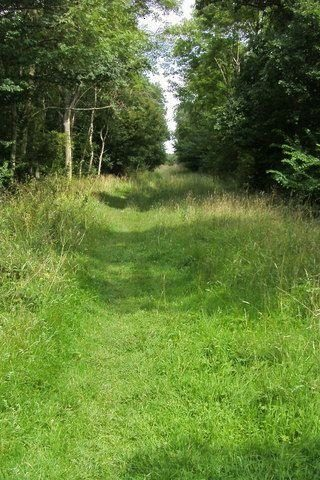 Dog walk at Brampton Woods Near Huntingdon photo