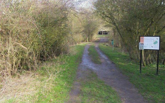 Brampton Woods Near Huntingdon Dog walk in Cambridgeshire