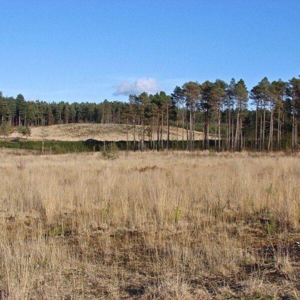 Bramshill Forest photo 1