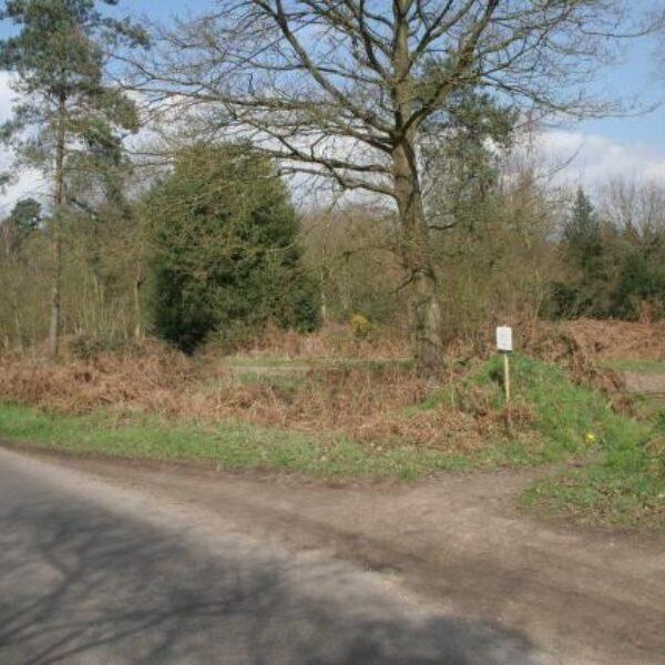 Bramshill Forest photo 2